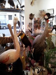 flamant rose oiseaux exotiques taxidermie galerie chardon paris