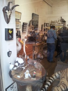 vitrine galerie chardon taxidermie paris