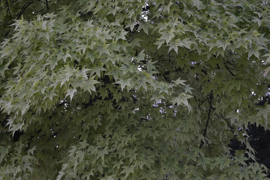 arbre parc paul mistral grenoble